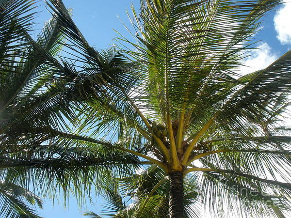 Photograph - Palm Trees by Jeanie Watson
