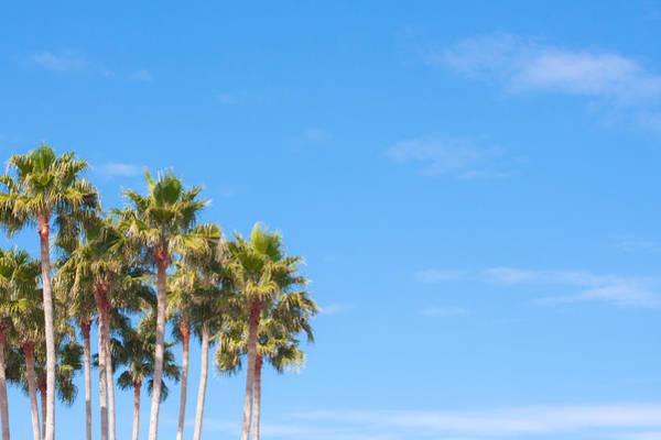 Wall Art - Photograph - Palm Trees by Tom Gowanlock