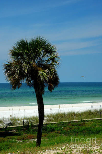 Photograph - Palmetto And The Beach by Susanne Van Hulst