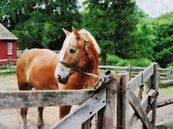 Photograph - Palomino In Paddock by Susan Savad