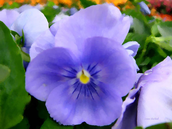 Donna Digital Art - Pansies In The Outfield by Donna Blackhall