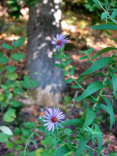 Photograph - Paradise Springs Flowers 1 by Anita Burgermeister