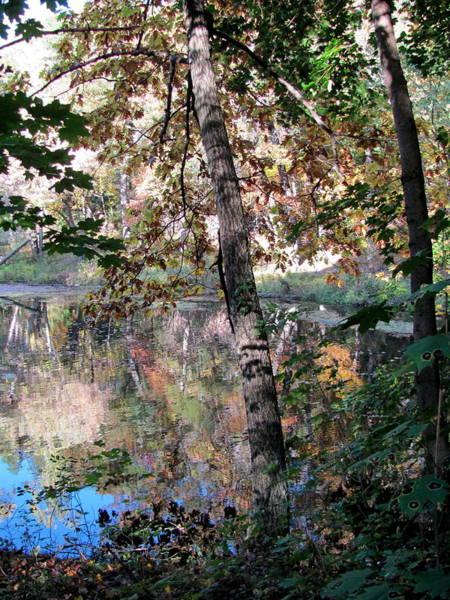 Photograph - Paradise Springs Trees by Anita Burgermeister