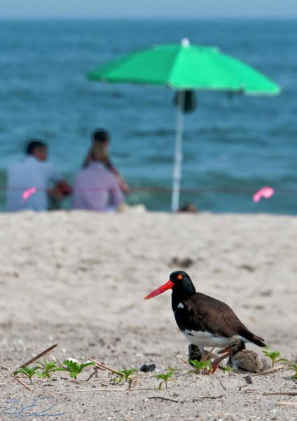 Photograph - Parenting On A Beach by S Paul Sahm