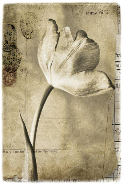 Filoli Photograph - Paris Papers by Linda Dunn