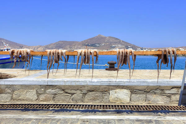Squid Photograph - Paros - Cyclades - Greece by Joana Kruse