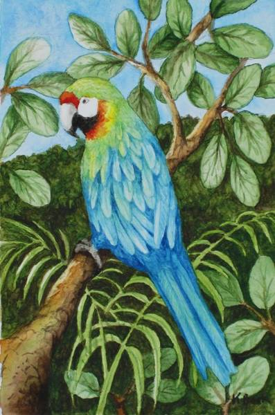 Wall Art - Painting - Parrot by Katherine Young-Beck
