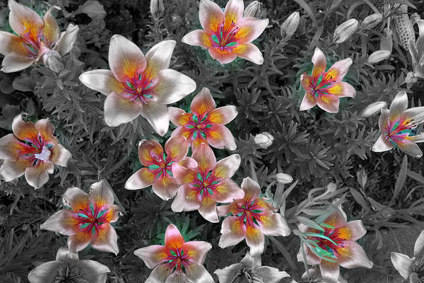 Pasqueflower In Silver Art Print