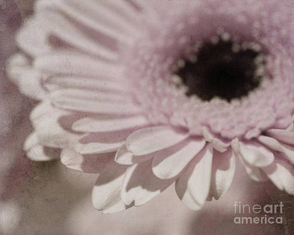 Photograph - Passionate by Traci Cottingham