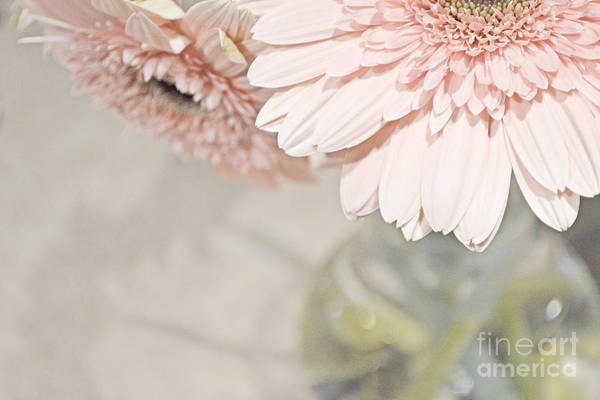Photograph - Passionly  Pink by Traci Cottingham