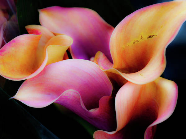 Hakon Photograph - Pastel Flowers by Hakon Soreide