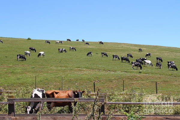 Photograph - Pastoral Landscape Of Point Reyes California . 7d15962 by Wingsdomain Art and Photography