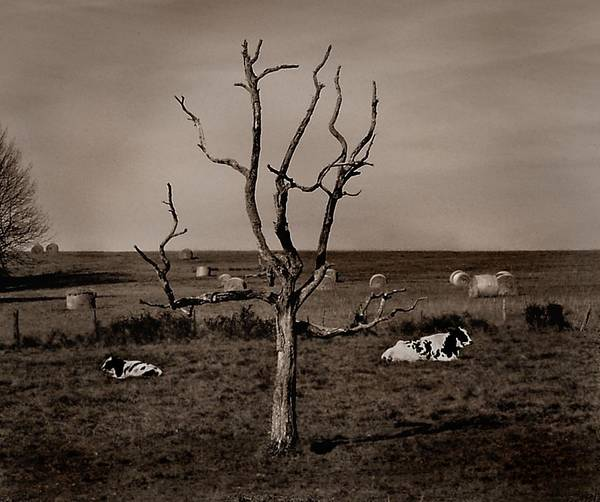 Photograph - Pastorale by Mark Fuller