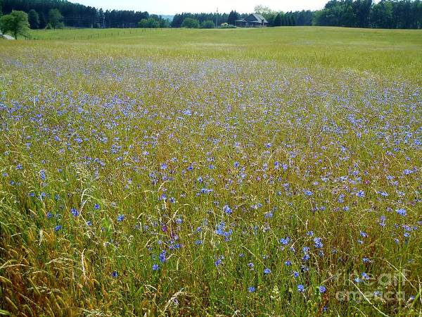 Wall Art - Photograph - Pasture Of Blue by Pauline Ross