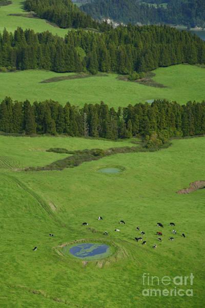 Acores Photograph - Pastures In Azores Islands by Gaspar Avila