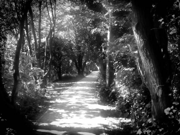 Photograph - Path by Roberto Alamino
