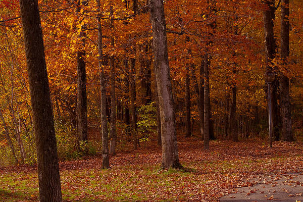 Smugglers Notch Photograph - Pathway Thru The Woods by Robert Torkomian