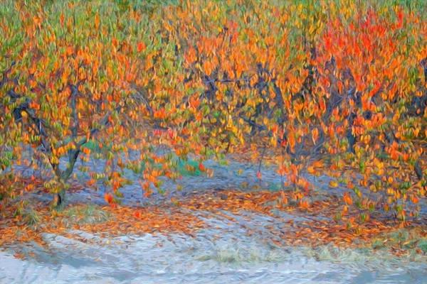 Orchard Digital Art - Peach Orchard by Mark Greenberg