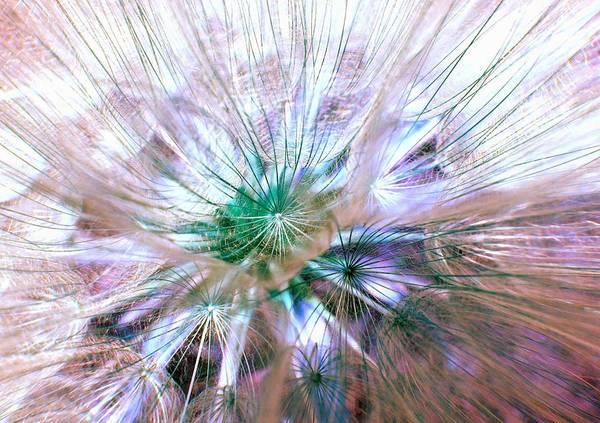 Photograph - Peacock Dandelion - Macro Photography by Marianna Mills