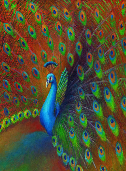 Peafowl Painting - Peacock Spread by Nancy Tilles