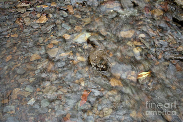 Photograph - Pebblebrook by Michael Waters
