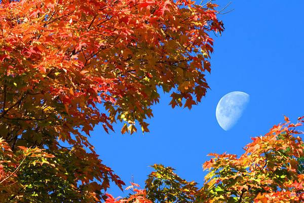 Photograph - Peekaboo Moon by Larry Landolfi