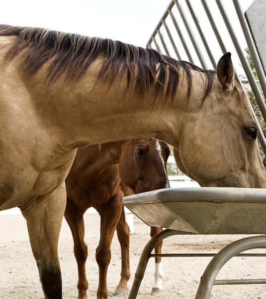 Photograph - Peeking Pony by Lorraine Devon Wilke