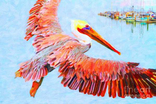 Photograph - Pelican Flying Back To The Docks by Wingsdomain Art and Photography