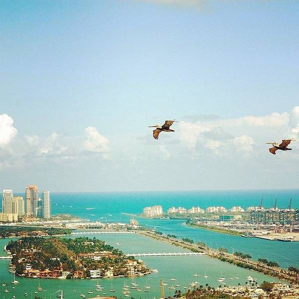 Sea Photograph - Pelicans Above Biscayne Bay by Joel Lopez