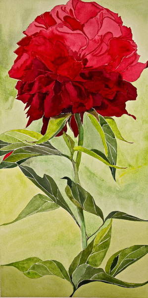 Painting - Peony-posthumously Presented Paintings Of Sachi Spohn  by Cliff Spohn