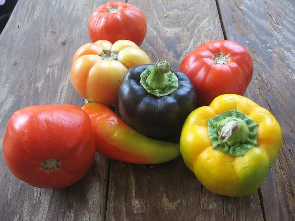 Photograph - Peppers And Tomatoes by Deb Martin-Webster