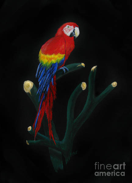 Wall Art - Painting - Perched Macaw by Peter Piatt