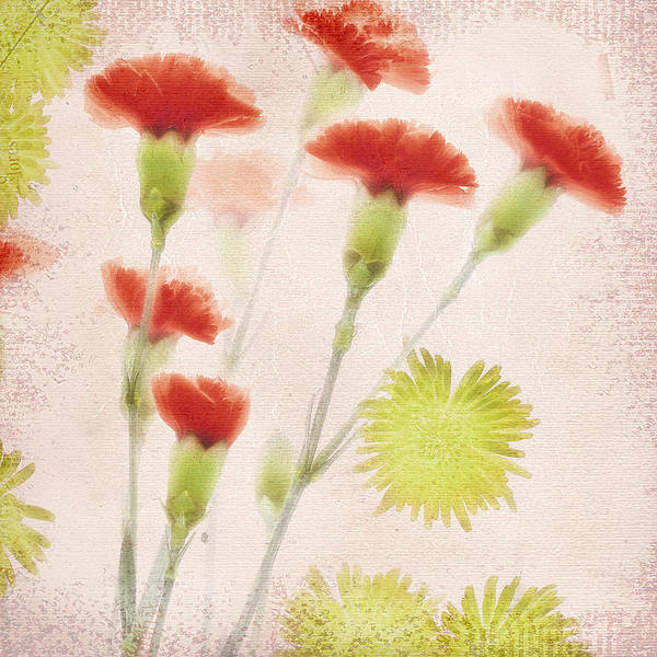 Chartreuse Photograph - Petals On The Wind by Bonnie Bruno