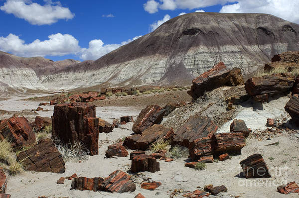 Petrified Logs Photograph - Petrified Forest 2 by Bob Christopher