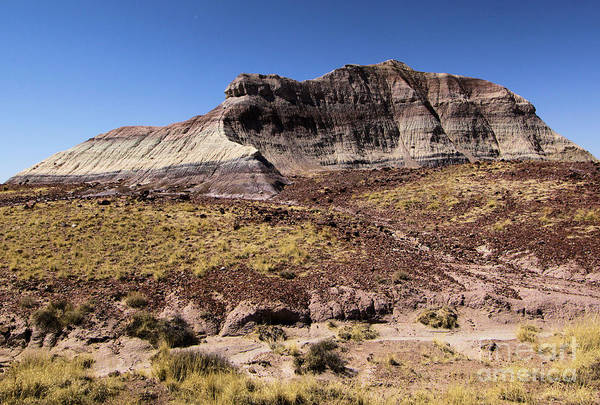 Photograph - Petrified Forest Badlands by Adam Jewell