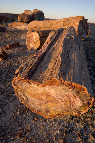 Petrified Logs Photograph - Petrified Forest by Bryan Allen