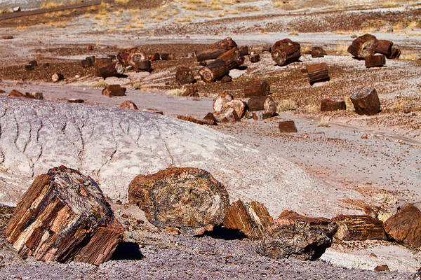Petrified Logs Photograph - Petrified Forest National Park by James BO Insogna