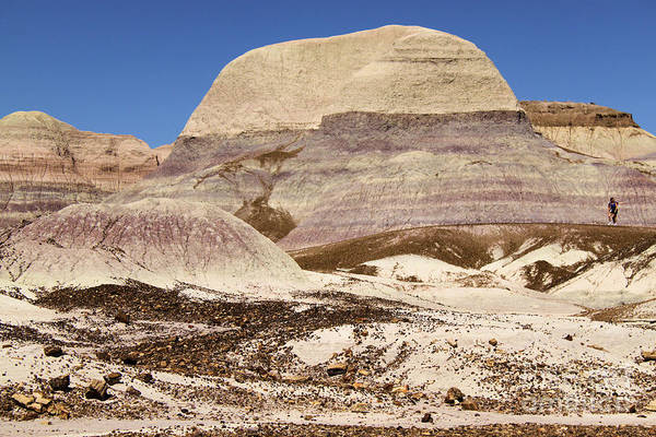 Photograph - Petrified Forest Painted Desert by Adam Jewell
