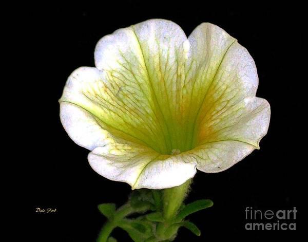 Digital Art - Petunia 2 by Dale   Ford