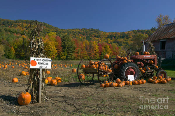 Photograph - Pick Your Own Pumpkins by Clarence Holmes