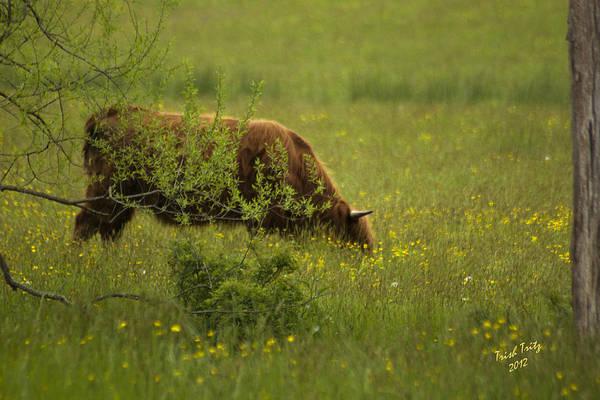 Photograph - Pickin' Wildflowers by Trish Tritz