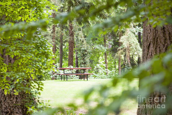 Redmond Photograph - Picnic Table In Woods by Andersen Ross