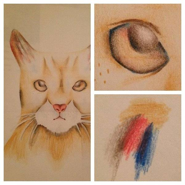 Grace Wall Art - Photograph - #picstitch #nofilter #cat #ginger #cute by Grace Shine