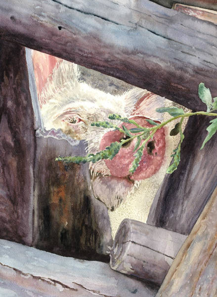 Pig Painting - Pig Peeking Through A Fence by Anne Gifford