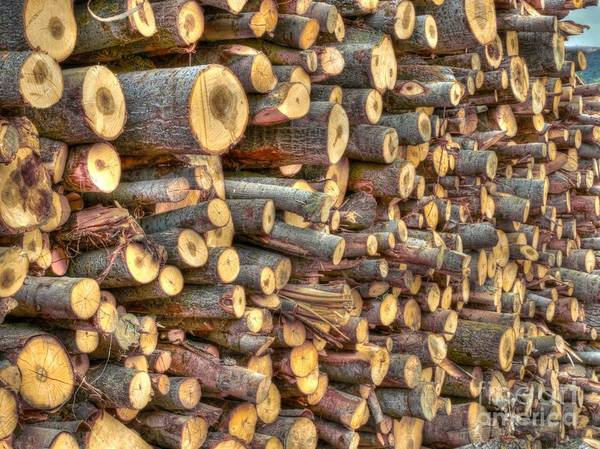 Fuel Element Photograph - Piled Wood by Alfredo Rodriguez
