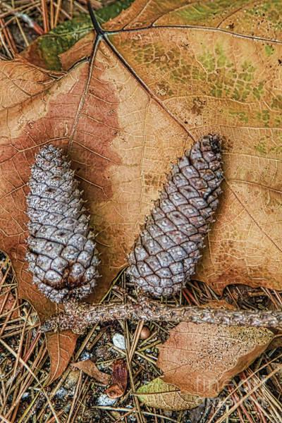 Photograph - Pine Cones And Leaves by Deborah Benoit