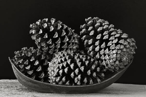 Wall Art - Photograph - Pine Cones- St Lucia by Chester Williams