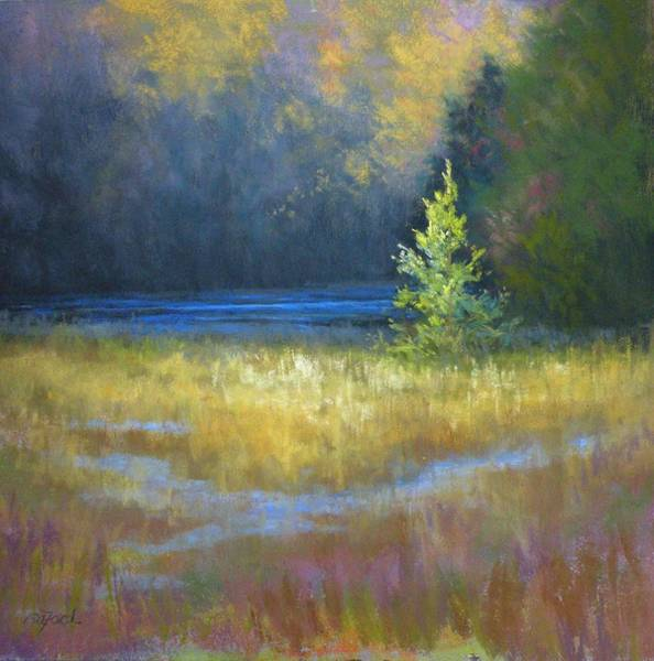 Wall Art - Painting - Pine In The Spotlight by Paula Ann Ford