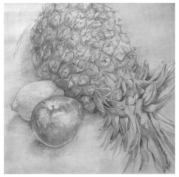 Pineapples Drawing - Pineapple And Fruit Study by Elizabeth Carrozza