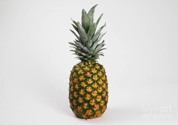 Pineapple Photograph - Pineapple by Photo Researchers, Inc.